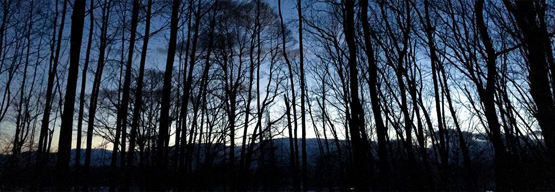 カルシノの森について